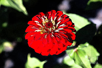Zinnia Red Flower Floral Decor Macro Closeup Fresco Digital Art Art Print