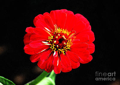 Digital Art - Zinnia Red Flower Floral Decor Macro Fresco Digital Art by Shawn O'Brien