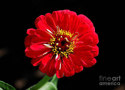 Digital Art - Zinnia Red Flower Floral Decor Macro Watercolor Digital Art by Shawn O'Brien