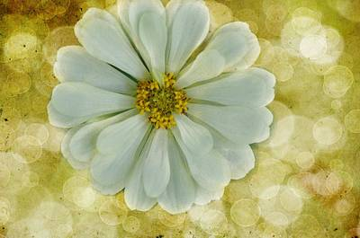 Photograph - Zinnia Sparkle by Jan Amiss Photography