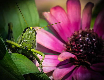Bug Eyes Photograph - Zinnia Surprise by Karen Wiles