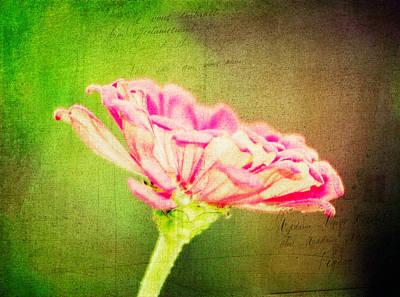 Photograph - Zinnia Flower Digital Art by Vizual Studio