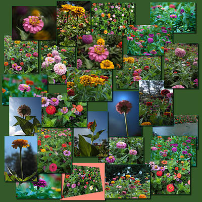 Zinnias Collage Square Art Print by Thomas Woolworth
