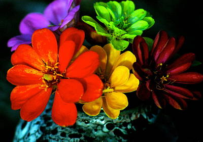 Art Print featuring the photograph Zinnias by Lehua Pekelo-Stearns