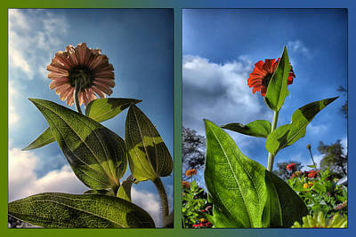 Bed Quilts Digital Art - Zinnias Standing Tall 2 Panel by Thomas Woolworth