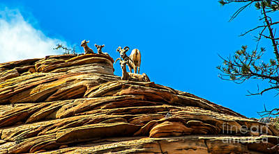 Photograph - Zion Bighorn Sheep by Robert Bales