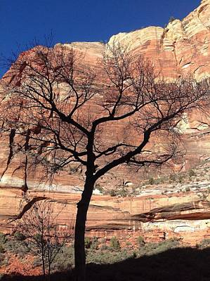 Zion Canyon Tree #2 Art Print by Feva  Fotos