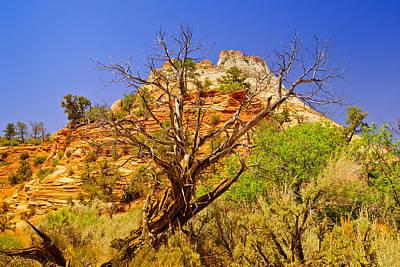 Zion Photograph - Zion Desert by Greg Norrell