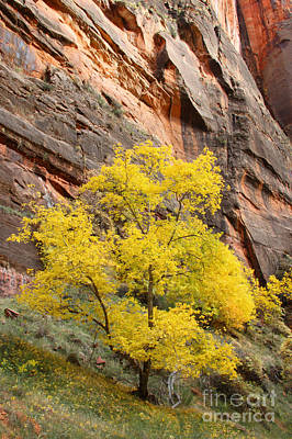 Photograph - Zion Gold by Bill Singleton