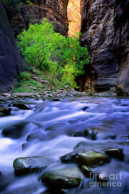 Zion Narrows Art Print by Inge Johnsson