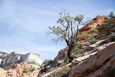 Photograph - Zion National Park 1 by Natalie Rotman Cote