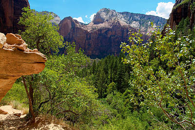 Photograph - Zion National Park 10 by Richard J Cassato