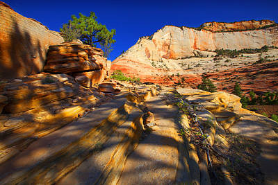 Photograph - Zion Park by Richard Wiggins