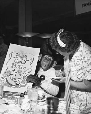 Ordering Photograph - Zippy The Chimp by Dick Hanley