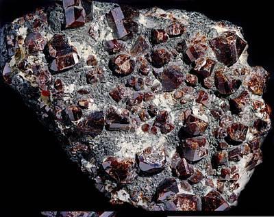 Zircon Photograph - Zircon Crystals by Science Photo Library