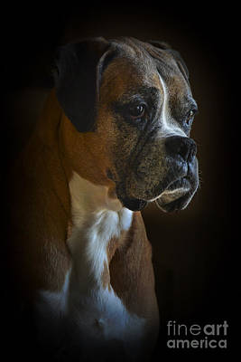 Photograph - Zoey by Ken Johnson