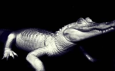 Freakish Photograph - Zombie Gator by Jeremy Martinson