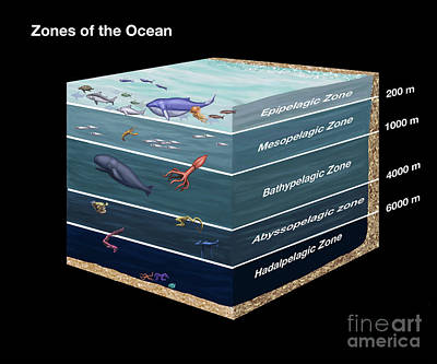 Photograph - Zones Of The Ocean by Spencer Sutton