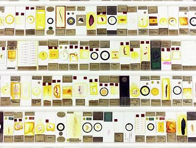 Zoological Microscope Slides Art Print by Daniel Sambraus