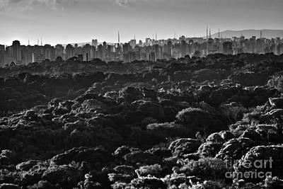 Quadro Photograph - Zoosampa by Milton Galvani