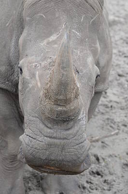 Photograph - Zootography Of The Business End Of The White Rhino by Jeff at JSJ Photography
