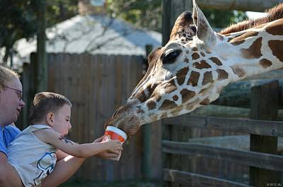 Photograph - Zootography2 Happy To Feed The Giraffe by Jeff at JSJ Photography