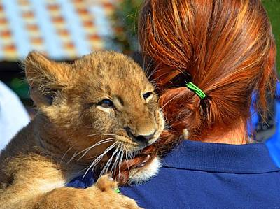 Photograph - Zootography3 Zion The Lion Cub Likes Redheads by Jeff at JSJ Photography