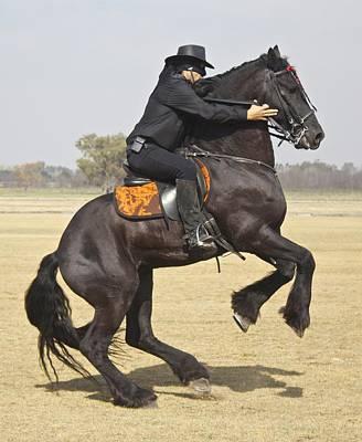 Swordsman Photograph - Zorro Rides Again by Venetia Featherstone-Witty