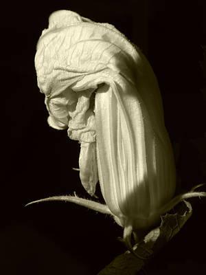 Zucchini Flower Art Print