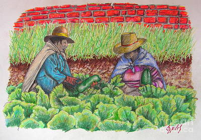 Drawing - Zucchini In Peru by Lew Davis