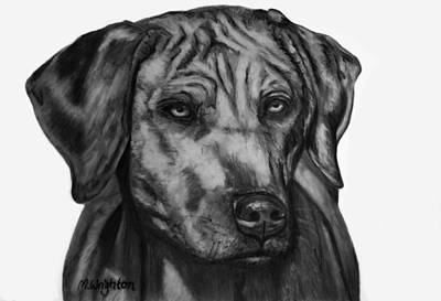 Drawing - Zulu Rhodesian Ridgeback by Michelle Wrighton