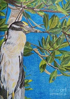 Yellow Crested Night Heron Painting Art Print by Judy Via-Wolff