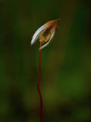 Photograph -  Alone by Jouko Lehto