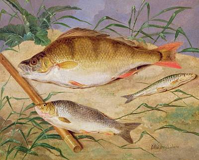 An Angler's Catch Of Coarse Fish Art Print by D Wolstenholme