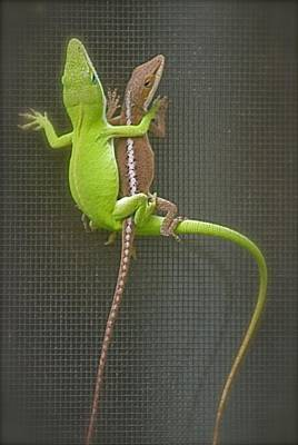 Photograph -  Anole Amour  by Jeanne Kay Juhos