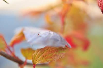 Photograph -  Autumn  by Puzzles Shum