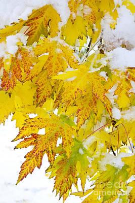 Autumn Snow Portrait Art Print by James BO  Insogna