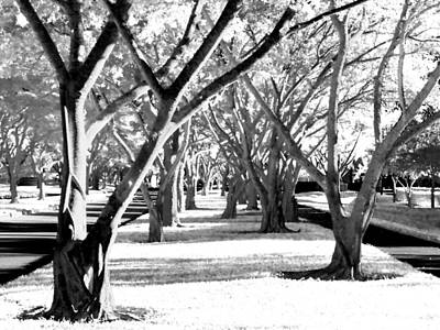 Photograph -  Banyan Trees by Tom Bush IV