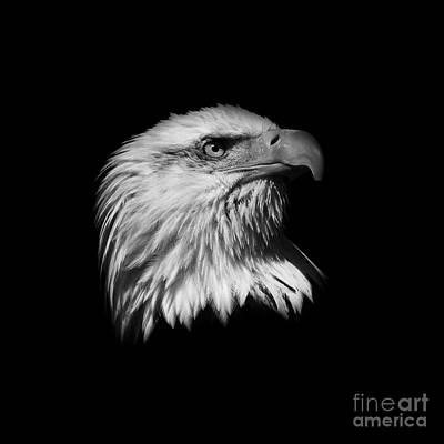 Black And White American Eagle Print by Steve McKinzie