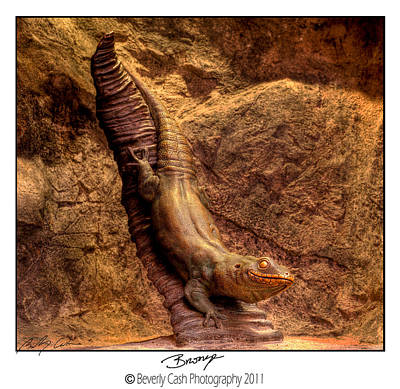 Photograph -  Bronze Lizard by Beverly Cash