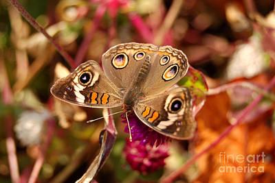 Art Print featuring the photograph  Buckeye Butterfly  by Eva Kaufman