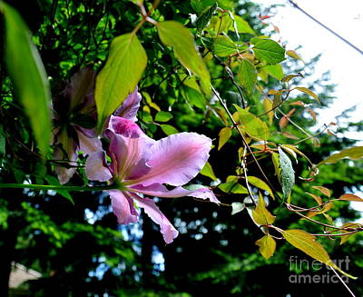 Art Print featuring the photograph  Clematis Flower by Tanya  Searcy