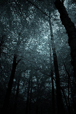 Dark Forest Silhouetted Against Sky Art Print