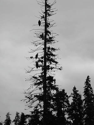 Eagle Silhouette - Bw Art Print