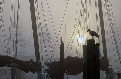 Photograph -  Early Morning At The Boat Docks by Dorothy Cunningham