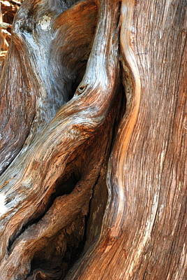 Eastern Red Cedar Wall Art - Photograph -  Eastern Red Cedar by Kathy Gibbons