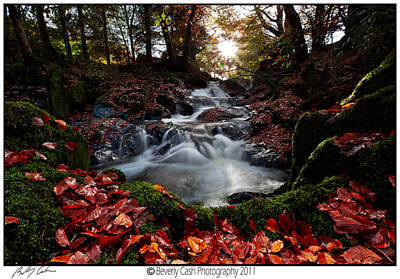 Photograph -  Falls In The Fall by Beverly Cash