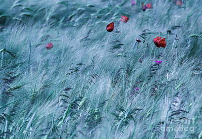 Field Art Print by Odon Czintos