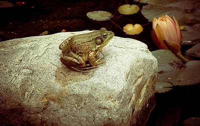 Lilly Pond Mixed Media -  Frog Chillin by Connie Dye