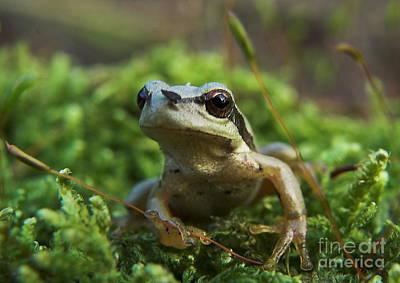 Frog Art Print by Odon Czintos